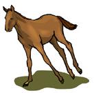 inglês: strong as a horse