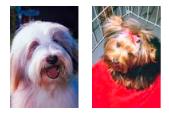 inglês: dogs
