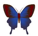 borboleta em inglês
