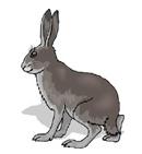 coelho em inglês