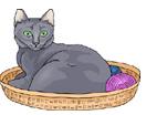 gato em inglês
