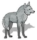 lobo em inglês
