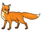 raposa em inglês