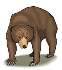 urso em inglês