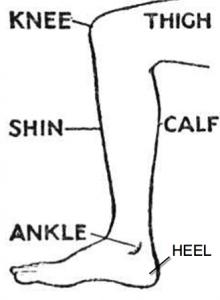 Partes do corpo em inglês, perna