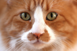 Como falo em inglês: O gato comeu a sua língua?
